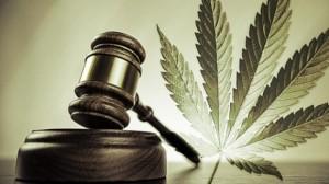 Cannabis legale, i vantaggi per le casse dello Stato
