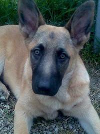 il nostro cagnolone