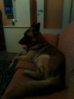 Al mio cagnolone.