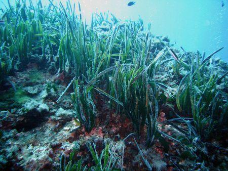 Protezione ambiente marino
