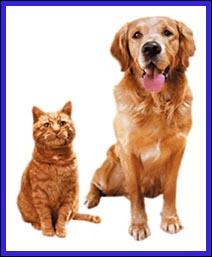 Anche cani e gatti hanno Alzheimer