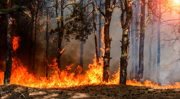 Un brasiliano su due contro Bolsonaro per la deforestazione